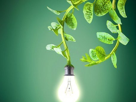 Dutch Harvest Electricity From Living Plants To Power Streetlights, Wi-Fi & Cell Phones | MAREMMA MAGAZINE | Scoop.it