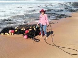 Shark net still adrift, admits Sharks Board - IOL SciTech | IOL.co.za | All about water, the oceans, environmental issues | Scoop.it