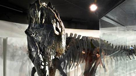 Dinosaur find cited as proof of Bible story | Newsworthy Notes - Apologetics | Scoop.it