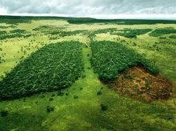 Three trillion trees live on Earth - and we need every one of them | Messenger for mother Earth | Scoop.it