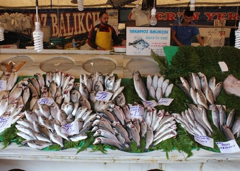 TURKEY: Targeting a major increase in fisheries production over the next decade | FOOD TECHNOLOGY  NEWS | Scoop.it