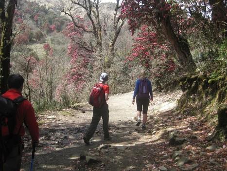 Spring - best time to trekking in Nepal   Adventure Nepal Trekking and Tours   Scoop.it