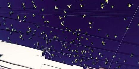Quand les perruches arrivent en ville | De Natura Rerum | Scoop.it