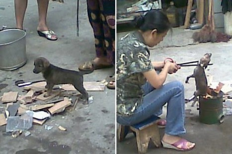 Puppy Roasted Alive Over Open Fire By Chinese Women – chinaSMACK | Nature Animals humankind | Scoop.it