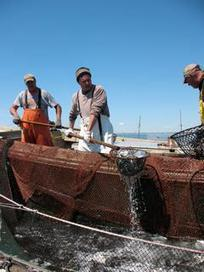 Who Fishes Matters: Hey Big Box Boats - We Got a Bone to Pick | Food issues | Scoop.it