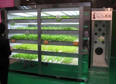Botanic Notables: The Lettuce Machine | Garden Design | Vertical Farm - Food Factory | Scoop.it