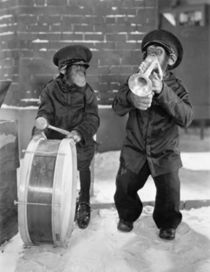 Musical Monkeys | Kitsch | Scoop.it