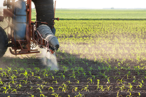 Chemical creep: Farmers return to pesticides as GMO corn loses bug resistance | Messenger for mother Earth | Scoop.it
