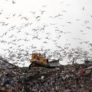 Ban food from landfill - study - The Press Association | Vertical Farm - Food Factory | Scoop.it