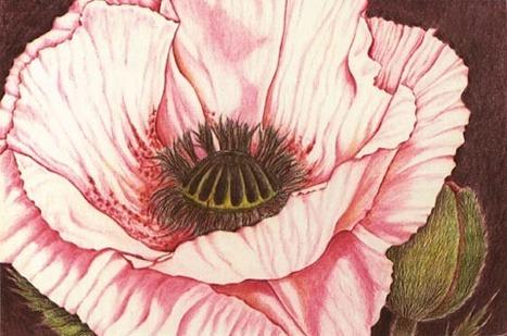 come disegnare un fiore di papavero   Circolo d'Arti   Scoop.it