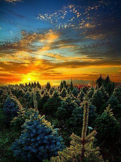 Sunrise...sunset | Today's Stories | Scoop.it