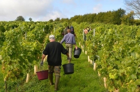 """Belgium produces more than 1 million litres of wine 