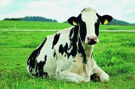 CuriositaTICs: Qué verde era mi vaca... ¿O era mi valle? | CuriositaTICs | Scoop.it