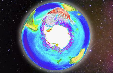 El krill antártico podría extinguirse por la acidificación del océano   Sustain Our Earth   Scoop.it