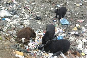 Guess which North American country produces the most garbage. Wrong! | All about water, the oceans, environmental issues | Scoop.it
