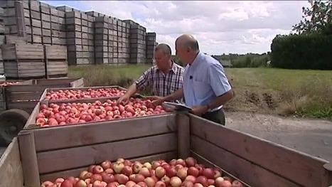 La saison a été belle... pour les pommes aussi ! | Agriculture en Dordogne | Scoop.it