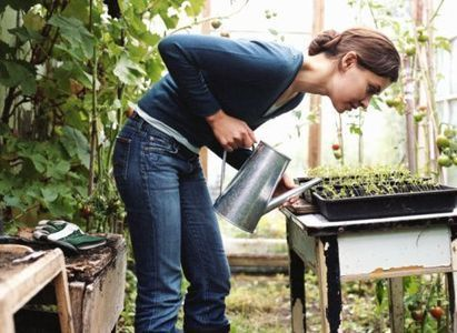 Warm up your greenhouse - Telegraph | Greening your home | Scoop.it