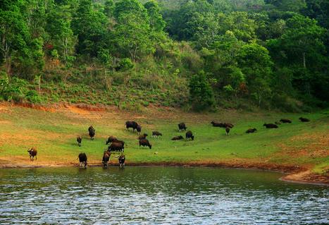 Thekkady, Hotels, Thekkady Resorts, Homestay in Thekkady, Wildlifesanctuary, Hill Station | kerala Tourism Destinations | Scoop.it