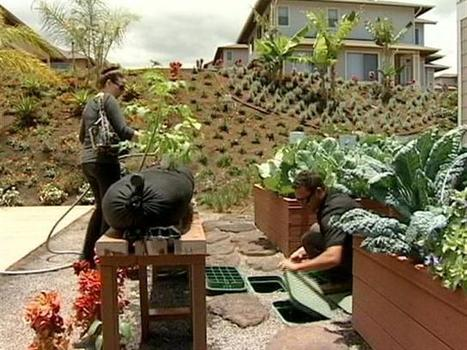 Home builder offers vegetable gardens as options. | Restorative Developments | Scoop.it