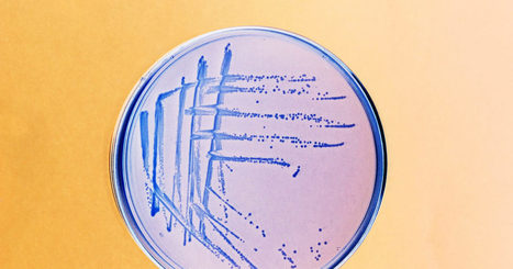 That New Superbug Was Found in a UTI and That's Key | STEM Connections | Scoop.it