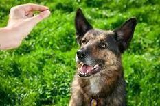 aubreyjdionisio's Journal Entry: Helpful information to your dog training salt lake city for police force | Dog training utah | Scoop.it