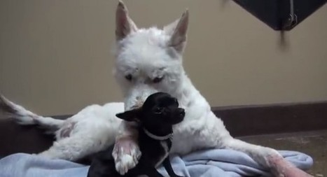 'Very Touching': Video of Rescued Homeless Dog Taking Another Under Her Wing Goes Viral | Dog Lovers | Scoop.it