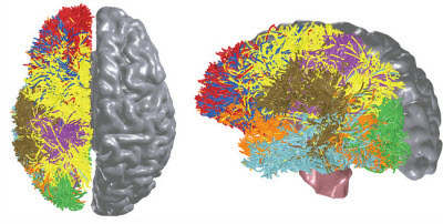 IBM produces first working chips modeled on the human brain | VentureBeat | digitalassetman | Scoop.it