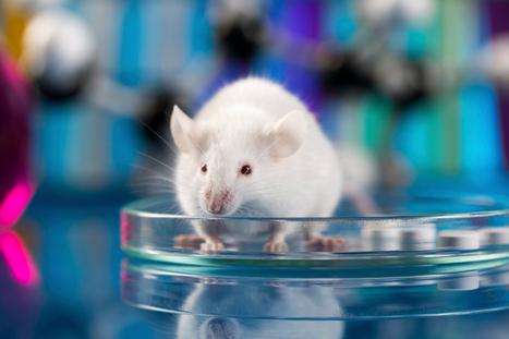 Alzheimer : une molécule annule la perte des fonctions cognitives ... - TopSanté | dépendance due au vieillissement de la population | Scoop.it