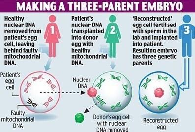 UK nods for three parent IVF   Surrogacy   Scoop.it