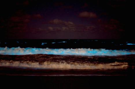 "Spectacular Bioluminescent ""Sea Sparkles"" Glow at Brava Beach in Uruguay   Le It e Amo ✪   Scoop.it"
