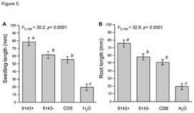 PLOS ONE: Endohyphal Bacterium Enhances Production of Indole-3-Acetic Acid by a Foliar Fungal Endophyte | Plant growth-promoting actions | Scoop.it