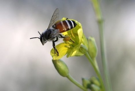 Decline of Pollinators Poses Threat to World Food Supply, Report Says | Food issues | Scoop.it