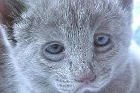 Ces 20 chats ont passé une pire soirée que la vôtre   Trollface , meme et humour 2.0   Scoop.it