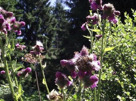 [Ecouter] Planète environnement - #Biomimétisme Quand la nature inspire / France Inter | Chimie verte et agroécologie | Scoop.it