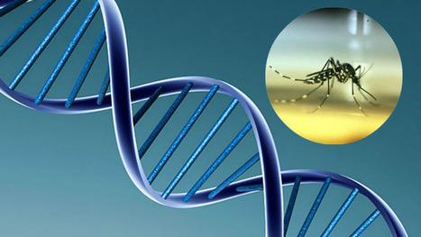 Résistance accrue des moustiques aux insecticides : l'ADN a parlé | EntomoNews | Scoop.it