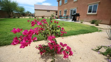 Drought affects landscaping in new desert communities | Arid Landscapes | Scoop.it