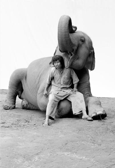 Amazing wildlife photographer Carol Stevenson | Asia Travel Tips | Scoop.it
