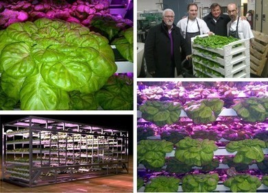 Canada: Urban Barns plans to grow Year-round produce in Newfoundland | Project - Thinking and Seeing Things Differently | Scoop.it
