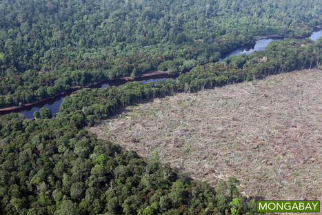 "Global forest loss reached 46 million acres in 2014 (""decline of 20% vis-a-vis 2012; 9% less 2013"") 