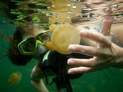 Swim in Jellyfish Lake in Palau, Micronesia - Bucket List Journey: Travel, Adventure & Food | Visit Palau | Scoop.it