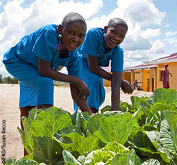 FAO - Youth for Food Security and Nutrition (Y4FSN) Idea Incubator | Appels à projets | Scoop.it