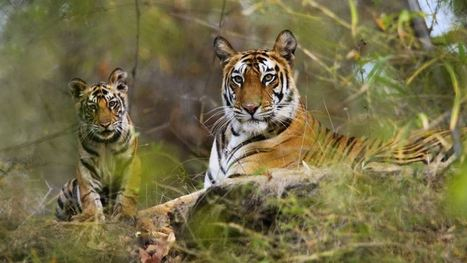 Discover the most famous national parks in India | Wildlife tours in India | Scoop.it