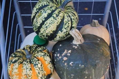 How to Find & Join a CSA and 10 Questions to Ask Before Becoming a Member — My Halal Kitchen | Community Support Agriculture | Scoop.it