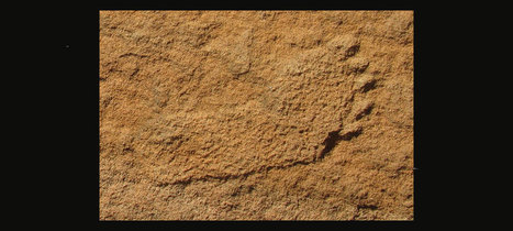 Tracking in caves: on the trail of pre-historic man : Archaeology News from Past Horizons | Archaeology News | Scoop.it