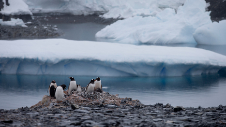 New Photos Reveal Antarctica's Glaciers are Melting Faster | The Weather ... - The Weather Channel | Antarctica | Scoop.it