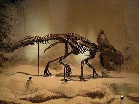 Dinosaur Poop Is Harder to Find Than It Should Be - Smithsonian (blog) | Dinosaurio | Scoop.it