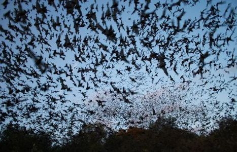 A Little Halloween Love for Bats | UANews | CALS in the News | Scoop.it