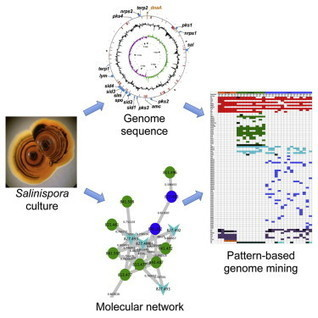Molecular Networking and Pattern-Based Genome Mining Improves Discovery of Biosynthetic Gene Clusters and their Products from Salinispora Species | Wiki_Universe | Scoop.it