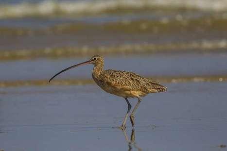 Landmark legislation continues to protect migratory birds | Citizens' Environmental Coalition (Houston) | Scoop.it