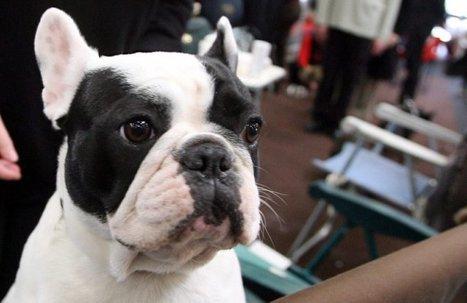 Meurthe-et-Moselle : il poignarde à mort son chien adopté 3 heures plus tôt   CaniCatNews-actualité   Scoop.it